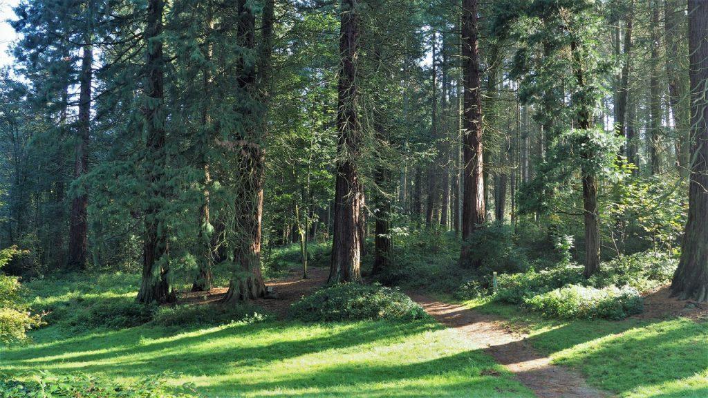 Tervuren Arboretum walk